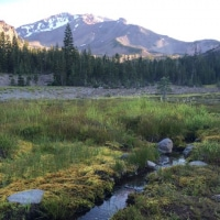 We walked through Panther Meadows (Mt Shasta) at sunrise and charged our BLESSED EARTH CRYSTALS ♡