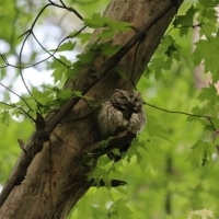 We released a BLESSED EARTH CRYSTAL under the tree that blessed with Sacred Ancient Wisdom Screech Owl