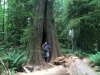 Connecting with Sacred Ancient with 300 to 800 year old trees,  Cathedral Grove, Vancouver Island