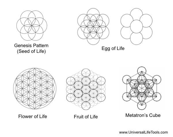 article 2  u2013 primordial cells  u2013 powerhouse of qi
