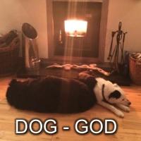 12 dog love