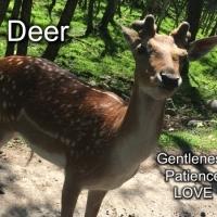 7 deer