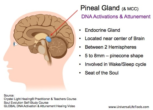 Article 1 - Awakening your Pineal Gland - Simone M. Matthews ...