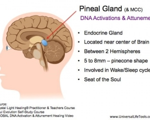 Pineal-Gland-DNA