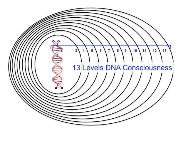 DNA Activation 13 levels