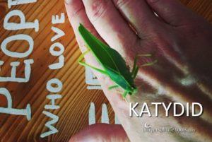 katydid-animal-spirit-meaning