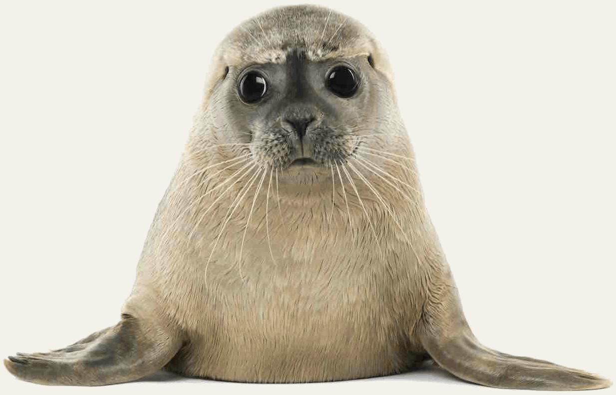 seal llr