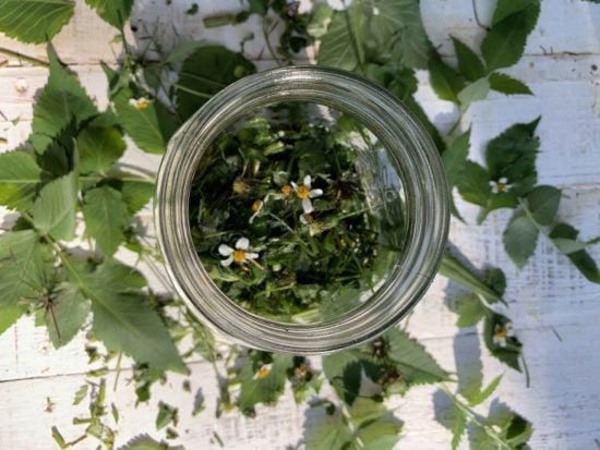 Cobblers Pegs Herbal Tincture Whole Plant