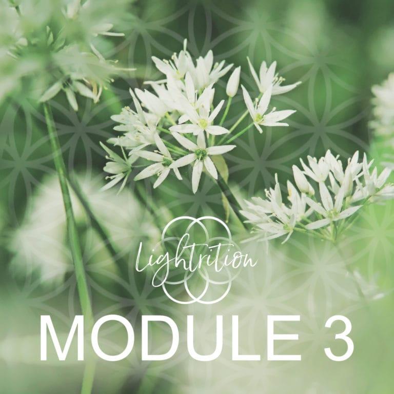 LYL Module 3 sq